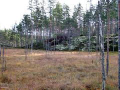 Helvetinjärvi Nationalpark (PeepeT) Tags: helvetinjärvinationalpark helvetinjärvenkansallispuisto suomenluonto luontokuvaus naturephotography finnishnature syksy autumn suo swamp mire