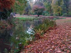 Farbenpracht Herbst (Naturportal) Tags: panasonic dmcgx8 olympus m1240mm f28 herbst fluss river park sachsen colors farben natur nature landschaft landscape