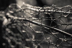 The picture that you took with your camera is the imagination you want to create with reality (Peter Jaspers) Tags: frompeterj© 2019 olympus zuiko omd em10 1240mm28 hff fence fenced happyfencefriday beekhuizen veluwezoom dof bokeh light bw blackwhite zwartwit mesh rheden