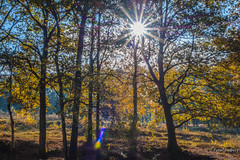 Notice that autumn is more the season of the soul than of nature (Peter Jaspers) Tags: frompeterj© 2019 olympus zuiko omd em10 1240mm28 autumn fall herfst forest beekhzuizen landgoedbeekhuizen natuurmonumenten veluwezoom rheden hike sunbeam sunflare flare trees colors landscape