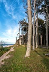 coastline (Guy Goetzinger) Tags: goetzinger nikon d500 coast coastline baltic sea trees forest wald ostsee gespensterwald arbres küste