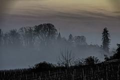 Vignes et brouillard (Lucille-bs) Tags: europe france bourgognefranchecomté bourgogne côtedor fixey fixin brouillard paysage clocher couleur vigne