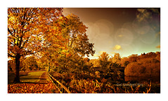 Quoile Brae Autumn Bokeh (Oul Gundog) Tags: quoile brae bridge co down northern ireland uk autumn leaves fall river rust rustle trees redheads ginger strawberry blonde gold rose hair leavrs colour autmn rusty red downpatrick