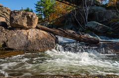4_DSC9228 (doug.metcalfe1) Tags: 2019 dougmetcalfe fall georgianbay mccraelakewaterfalls nature ontario outdoor