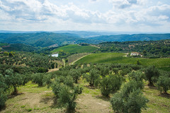 2019 Tuscany-Riviera-37 (Michael L Coyer) Tags: italy tuscany olive olivetree olivegrove grove hill field orchard mountain pond lake