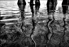 Cypress reflections Fuji xt10 18-55mm (ToddGraves2) Tags: