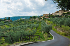 2019 Tuscany-Riviera-44 (Michael L Coyer) Tags: italy tuscany olive olivetree orchard olivegrove grove hills town village villa lane road