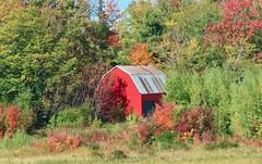 Day 10 - Charlottetown PEI to Truro, Nova Scotia, on our way to Cape Breton - Red barn with autumn colours near Pugwash (benlarhome) Tags: charlottetown princeedwardisland canada pugwash victoria