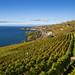 Lavaux Vineyard Terraces