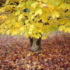 (Andrew :-)) Tags: bronicasqa kodakportra400 120 6x6 mediumformat winkwortharboretum autumn