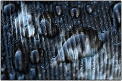 Macro of rain on a turkey feather (EXPLORE, Oct 31, 2019, #3) (RKop) Tags: macro rain turkey raphaelkopanphotography d500 nikkor200f4macro