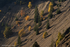 Scree and Trees along SR 14 in Washington (Gary L. Quay) Tags: washington columbiagorge scree screeslope pacificnorthwest westernusa autumn fall nikon garyquay