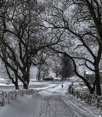 The long walk (Pollylop) Tags: hartington beastfromtheeast snow spring footprints snowdrift tree road march 2018 derbyshire england uk nikon