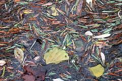 Autumn Natural Canvas (mariaminhota) Tags: autumn fallenleaves leaves river wetleaves variety colours water leavesonwater natural art naturalart canvas naturalbeauty beautiful canon naturalpainting wet mariaminhotaphotography