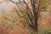 Autumn Follage in Niigata (seiji2012) Tags: japan niigata okutadami leaves tree 紅葉 奥只見 新潟 happyplanet asiafavorites
