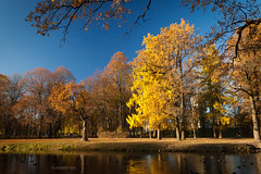 Golden Autumn (VladimirTro) Tags: россия царскоесело осень пейзаж russia russian tsarskoyeselo autumn park water landscape outdoor wood canon500d