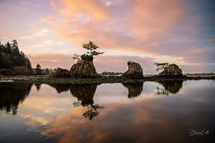 Morning Call (Selectivebits) Tags: sea beach tree oregon sunrise reflection naturebynikon bestcapturesaoi 200 aggroup pro flickr nikon 80 freedomx15 makewonderx20