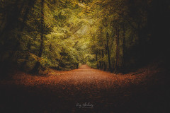 Out Of The Darkness (RTA Photography) Tags: autumn boveytracey oldrailway trees nature outdoors dark light shadows colours rtaphotography nikon d750 tamron tamron2470mmf28vcusd golden landscape autumnal autumnlandscape devon autumncolors autumncolours