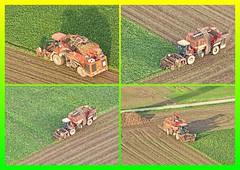 Siestedt (Magdeburg) Tags: rübenernte beet harvest rüben ernte beetharvest siestedt holmer maschinenbau holmermaschinenbau rübenroden rübenroder terra dos t4 terradost4 terrados terradost430 terradost440
