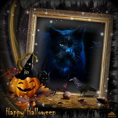 ♦♦♦ Happy Halloween ♦♦♦ (Xena*best friend*) Tags: rodolfovalentino rodolfo rv happyhalloween halloween pumpkin cats whiskers feline katzen gatto gato chats furry fur pussycat feral tiger pets kittens kitty animals piedmontitaly piemonte canoneos760d italy wood woods wildanimals wild paws calico markings ©allrightsreserved purr digitalrebelt6s flickr outdoor animal pet photo nature catlover autumn automne autunno outono iloveautumn efs18135mmf3556isstm
