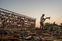 Dry Fish Worker Bangladesh (Zakir_Hossain) Tags: dryfishworkerbangladesh dryfishworkerchittagong stockimage photography people photo zakir zakirhossain chittagong canvasofcolor bangladesh beautifulbangladesh worker