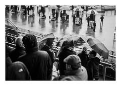 FILM - Rainy racedays (fishyfish_arcade) Tags: 35mm 800asa analogphotography bw blackwhite blackandwhite doncasterracecourse filmphotography filmisnotdead hp5 istillshootfilm monochrome olympusom1 analogcamera fzuiko50mmf18 film ilford mono streetphotography