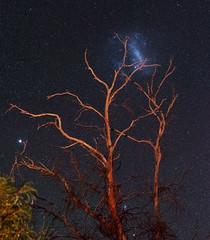 Large Magellanic Cloud - Quairading, Western Australia (inefekt69) Tags: large magellanic cloud lmc astrophotography astronomy cosmology stars space western australia ioptron skytracker 50mm sky quairading hoya red intensifier filter tree panorama stitched