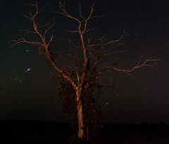 Orion - Quairading, Western Australia (inefekt69) Tags: astrophotography astronomy stars space western australia ioptron skytracker 50mm sky quairading hoya red intensifier filter tree panorama stitched orion nebula