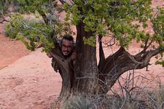 Hawk Vango in Tree (Toasto) Tags: tree man hiding smiling scary head desert arizona red rock outback juniper behind