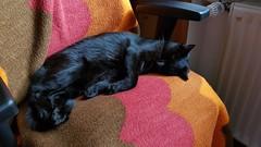 Paulchen 2019 😊 (kvasi23) Tags: gato katze cat ga haustier paulchen tiere nature