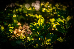 Golden Lights in the Forest (*Capture the Moment*) Tags: rot
