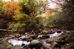'Autumn' challenge submission. Knocksink Forest, Enniskerry (UCD Staff Photography Club) Tags: knocksinkwoods enniskerry forest stream ireland wicklow dublin autumn longexposure