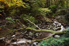 'Autumn' challenge (UCD Staff Photography Club) Tags: enniskerry dublin woods forest trees autumn river stream longexposure