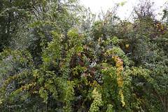 Herbst im Feld (Manfred Hofmann) Tags: bild farbe öffentlich flickr orte brd kurpfalz projekte pfalz jahreszeiten