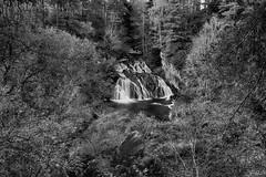 Photo of The beautiful little Falls of Ness waterfall nestled in Wood of Ness, near Kincardine O'Neil, Deeside, Aberdeenshire, Scotland. fine art black & white