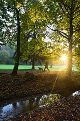 parco di Monza Italy (francesco (omino del vento)2) Tags: d810 autumn nikon landscape 24mm sigma sunset sunrise