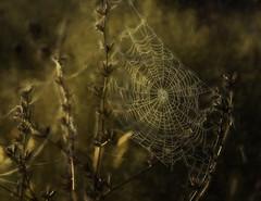 My Halloween photo.... (Kevin Povenz) Tags: 2019 october kevinpovenz westmichigan michigan ottawacounty ottawa ottawacountyparks grandravinesnorth web spiderweb halloween spooky canon7dmarkii