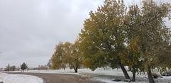 October 27, 2019 - A snowy scene. (ThorntonWeather.com)