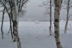 rundballer (KvikneFoto) Tags: nikon1j2 snø snow rundballer traktoregg