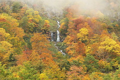 The nameless falls (Teruhide Tomori) Tags: falls autumn landscape nature mountain forest tree toyama tateyama japan japon 称名滝 立山 中部山岳国立公園 日本 秋 自然 森 紅葉 teteyama 富山県 滝 fog mist