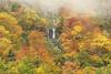 The nameless falls (Teruhide Tomori) Tags: falls autumn landscape nature mountain forest tree toyama tateyama japan japon 称名滝 立山 中部山岳国立公園 日本 秋 自然 森 紅葉 teteyama 富山県 滝 fog mist