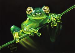 pretty little guy (irishishka) Tags: art artirishishka pastel painting animals realism figurative frog green drypastel иринамирошникова