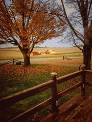 the view from the backyard... (BillsExplorations) Tags: harvest field backyard fall tree autumn farming agriculture farmmachinery fencefriday hff