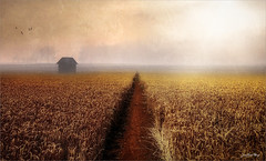 The line (Jean-Michel Priaux) Tags: paysage nature landscape line field place lonely lonesome alone geometric wheat corn grain home house sunset sky