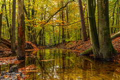 Autumn | Herfst Leuvenum (Leo Kramp) Tags: web beek data leokrampfotografie leuvenumsebossen herfst manfrotto410juniorgearedhead wwwleokrampfotografienl accessoires photography gitzogt3542ltripod jaargetijden natuurfotografie plaatsen 2019 2010s nederland accessoiries naturephotography netherlands places ermelo gelderland autumn