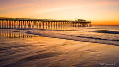 96 pigeon's.. (Earl Reinink) Tags: morning sunrise sunset peir ocean water color tide pattern architecture shores sand landscape seascape earlreinink southcarolina atlanticocean bird pigeon