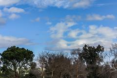 Open For Birds (davidseibold) Tags: america bakersfield california cloud hartpark jfflickr kerncounty nature park photosbydavid plant postedonfb postedonflickr sky tree unitedstates usa