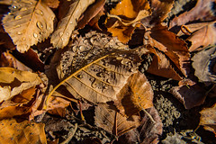Sprinkler Residue (davidseibold) Tags: america bakersfield california canonrebelt3i freshwater jfflickr kerncounty leaf nature photosbydavid platoct postedonflickr unitedstates usa water