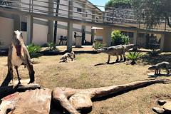 "Excursão para Monte Alto - Museus Histórico - Cultural - Paleontologia • <a style=""font-size:0.8em;"" href=""http://www.flickr.com/photos/134435427@N04/48990965903/"" target=""_blank"">View on Flickr</a>"