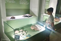 "Excursão para Monte Alto - Museus Histórico - Cultural - Paleontologia • <a style=""font-size:0.8em;"" href=""http://www.flickr.com/photos/134435427@N04/48990968798/"" target=""_blank"">View on Flickr</a>"